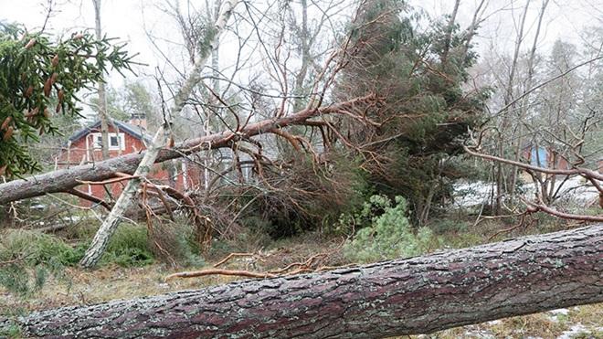 wat te doen bij schade aan woning door storm